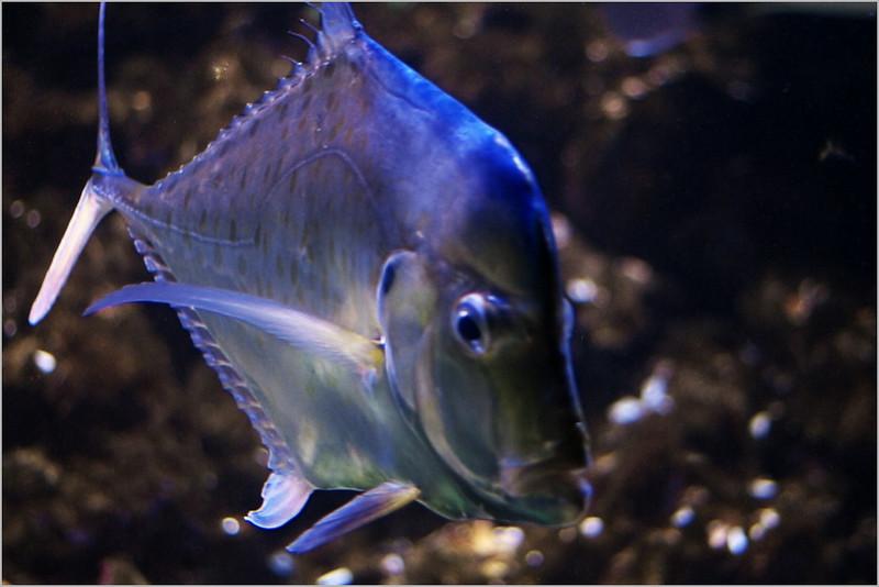 Na fotografii to není poznat, ale tahle ryba má na délku dobrý metr