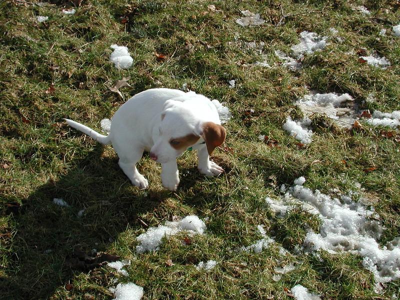 Feb 05- Puppies 029.jpg