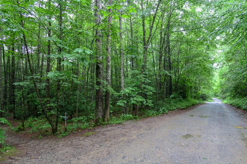 Barnett Branch Trail @ Yellow Gap Road (F.R. 1206) -- 3,300'