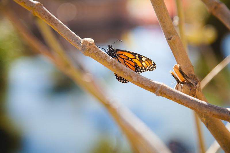 Natura Balboa park-3.jpg