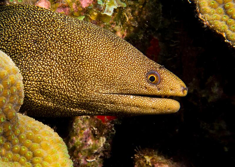golden eel bon18.jpg