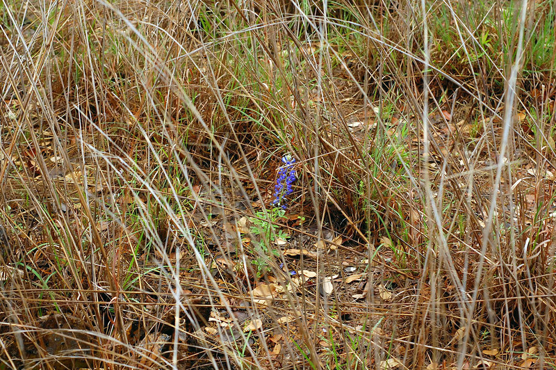 There were not nearly as many Bluebonnets as we had hoped, sort of a bummer.