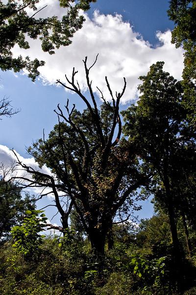 clip-015-tree-wdsm-24sep11-0360.jpg
