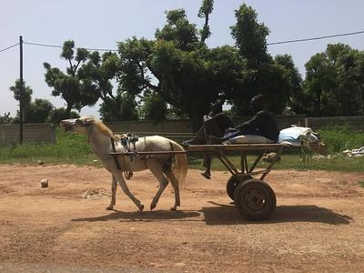 2016 - Senegal - West Coast