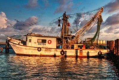 Gulf Coast Shrimp Boats