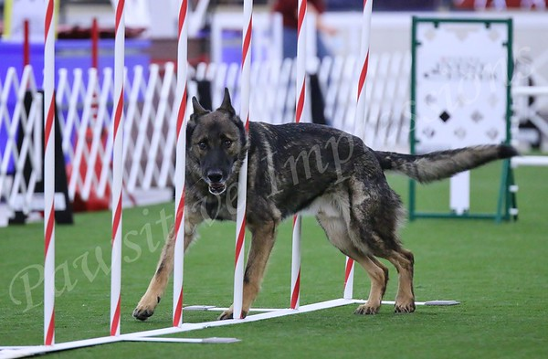 GSDCA All Breed Ex JWW Agility Sun 10 11 2015