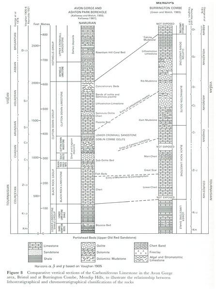 Carboniferous Column.jpg