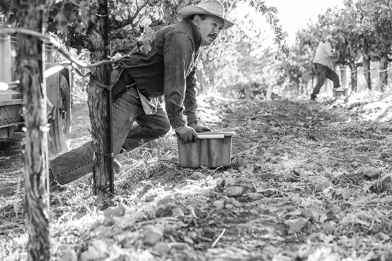 Grape Picker B&W - Crawling.jpg