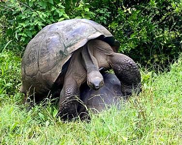 Galapagos: 2020 Topside Photos