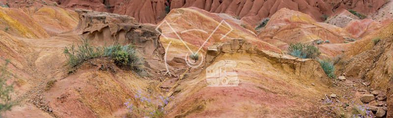 """Detail of small bushes and violet flowers growing on the red sandstone landscape at the """"Fairy tale canyon"""""""