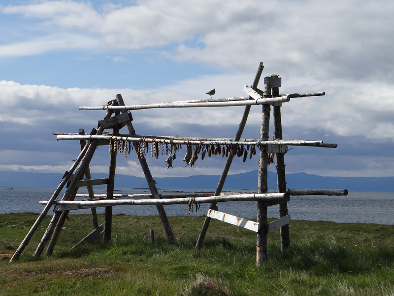 Drying fish on Flatey Island