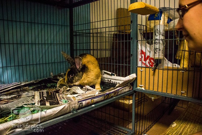 August 16, 2016 12 day old kits visit Daddy Bunny (11).jpg