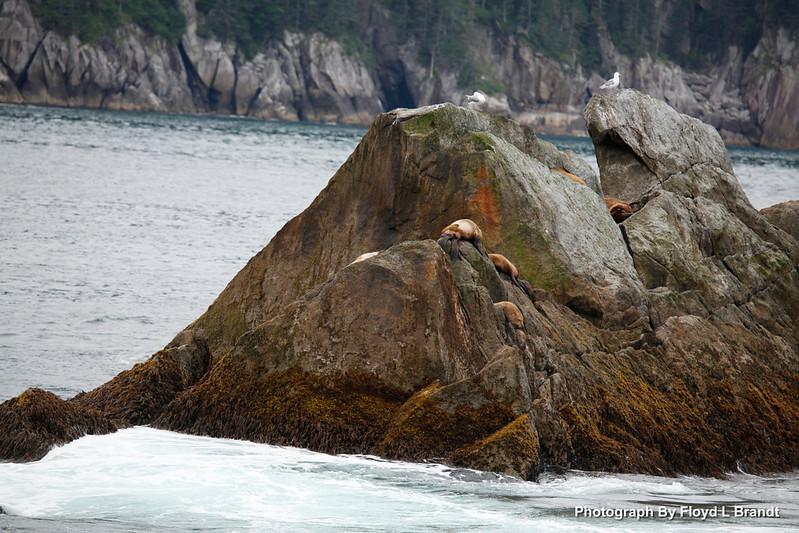 Alaska Kenai Fjords0111.JPG