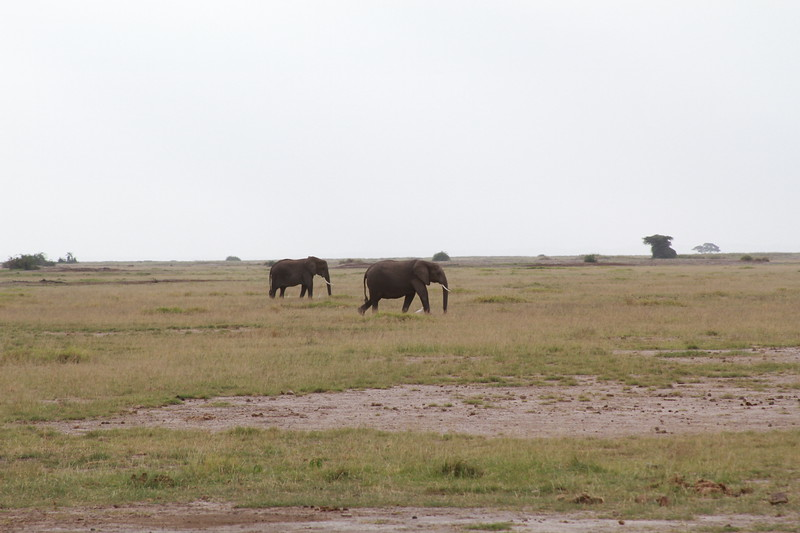 Kenya 2019 #2 304.JPG