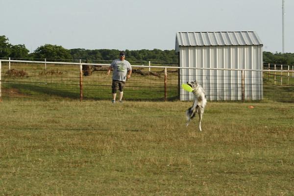 Tulsa Toss & Fetch- K9 Frisbee Summer Competition