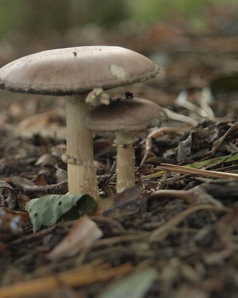 mushroom couple.jpg