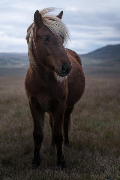 Icelandic Emo