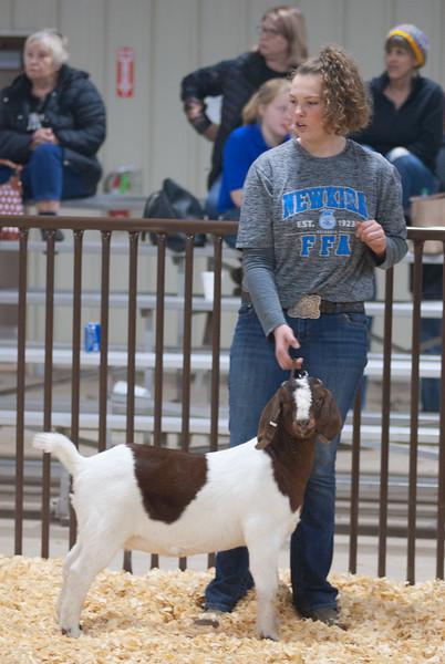 kay_county_showdown_goats_20191207-161.jpg