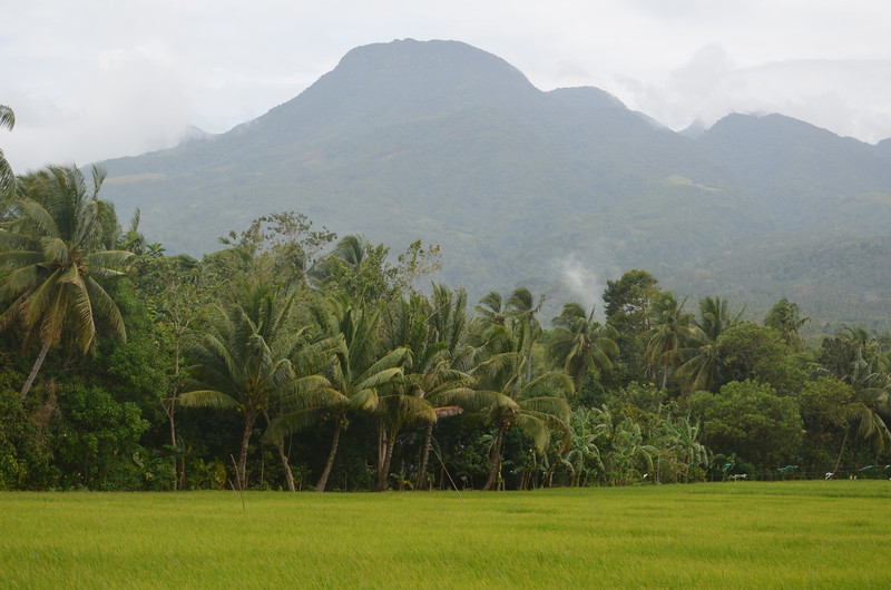 DSC_7503-rice-fields-and-mountain.JPG