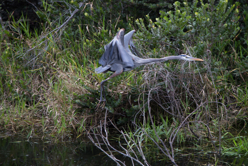 Everglades NP-0329-Select_E.jpg