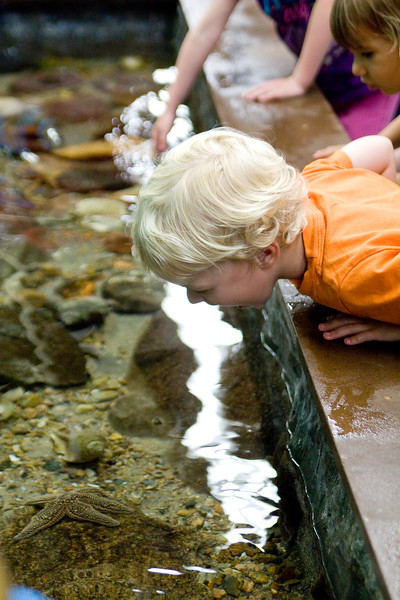 """Quinton checks out the starfish in the """"touch me"""" tank"""