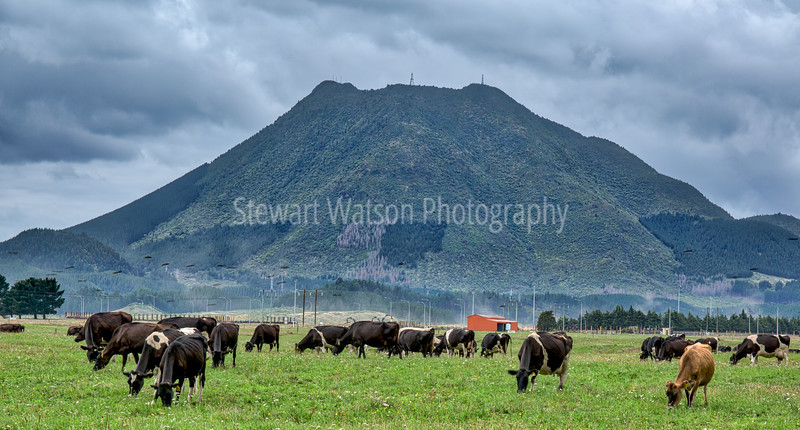 Mt Putauki, Kawerau