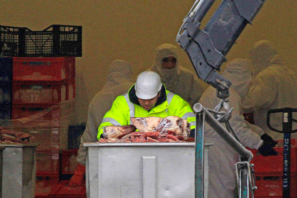 Description of . A worker pushes a container with blocks of meat before filling up a dump truck at Spanghero\'s French meat processing factory in Castelnaudary near Toulouse, southwestern France on February 15, 2013. A French inquiry into how horsemeat got into ready-made-meals sold across Europe found that the Spanghero firm labelled meat as beef when it knew what it was processing may have been horse. The privately-owned firm has had its operating license suspended for 10 days and will face legal action if the suspicions are confirmed. The president of Spanghero promised on Friday to disprove allegations that his firm knowingly sold horse meat labelled as beef, and accused the government of being too quick to point the finger.    REUTERS/Jean-Philippe Arles