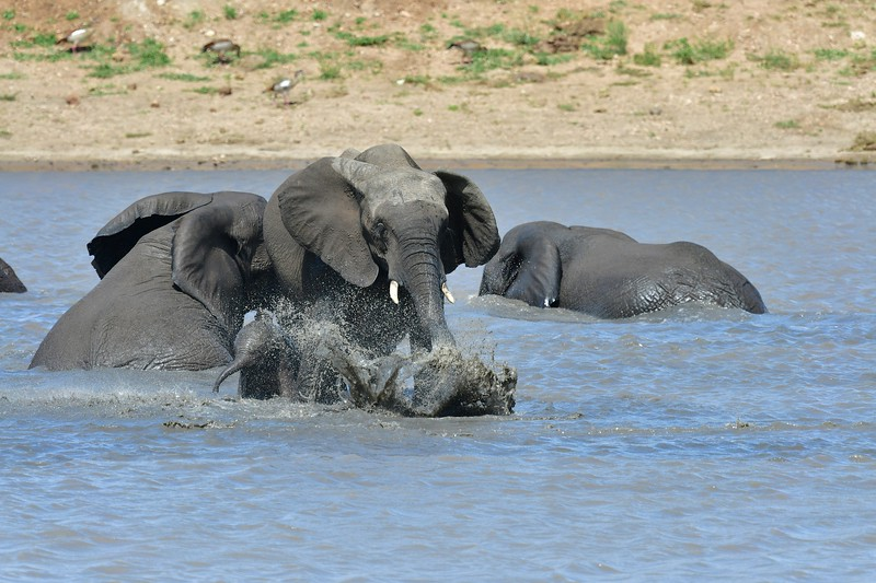 Elephants100.jpg