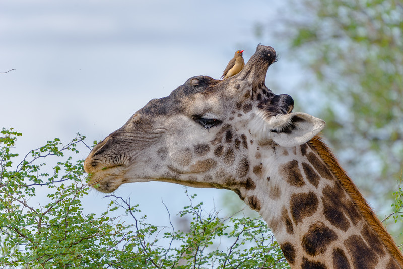 Safari-0366.jpg