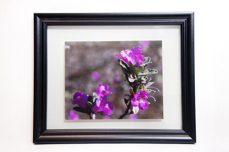 Amanda Kowalski   Spring Flower - Photo Print