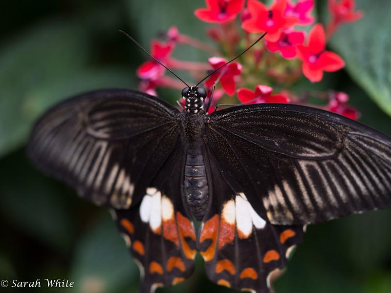 140503_ButterflyHouse_342.jpg