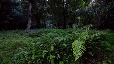 Mclaren Falls Glow worm bush