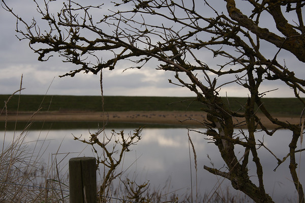 RSPB Frampton Marsh - January 2011