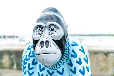 Go Wild Gorillas