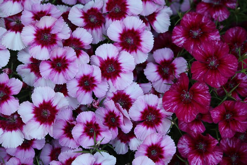 Flowers 1a 006.JPG