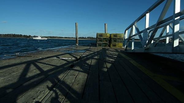 life at Gulf of Maine estuary