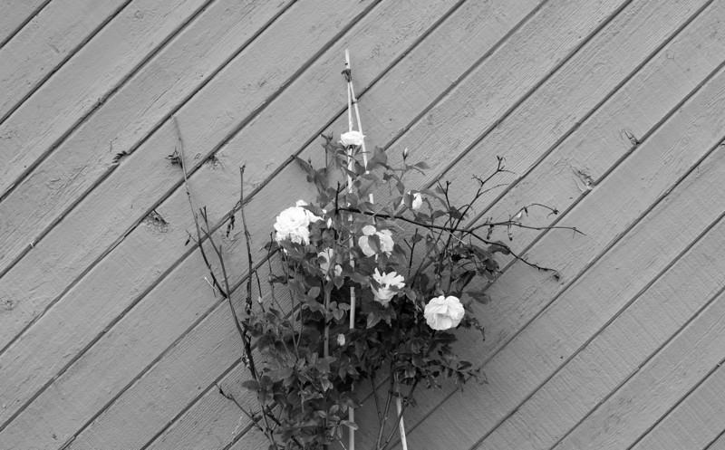 flower_272.jpg
