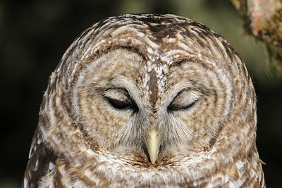 March 31, 2013 - Owl Festival - Part 2