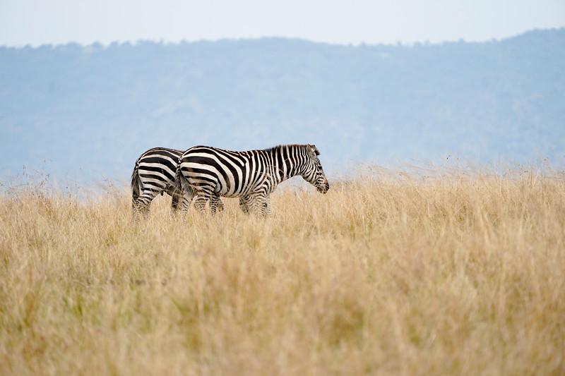safari-2018-107.jpg
