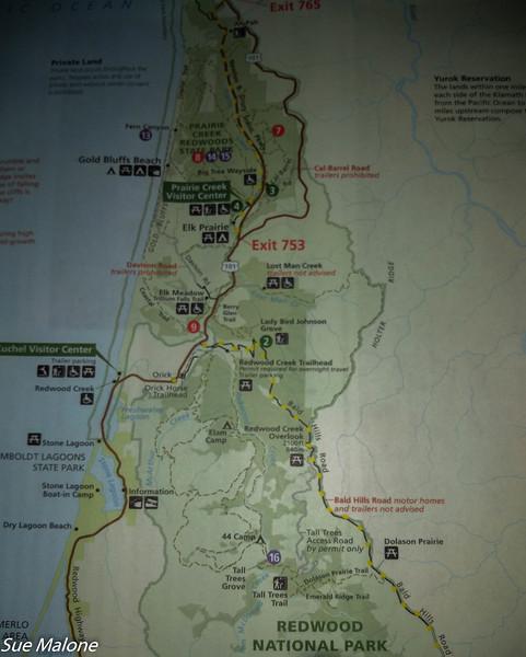 02-13-2021 Redwoods and Coast from Deborah-31.jpg