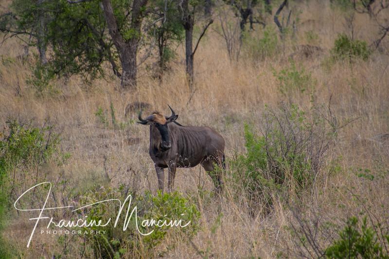 South Africa (3057 of 5206).jpg