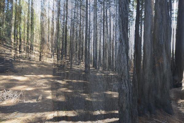 CZU Burn area