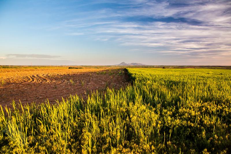 Fields of Dove Creek