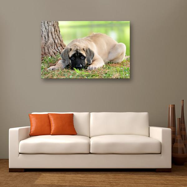 Mastiff Couch.jpg