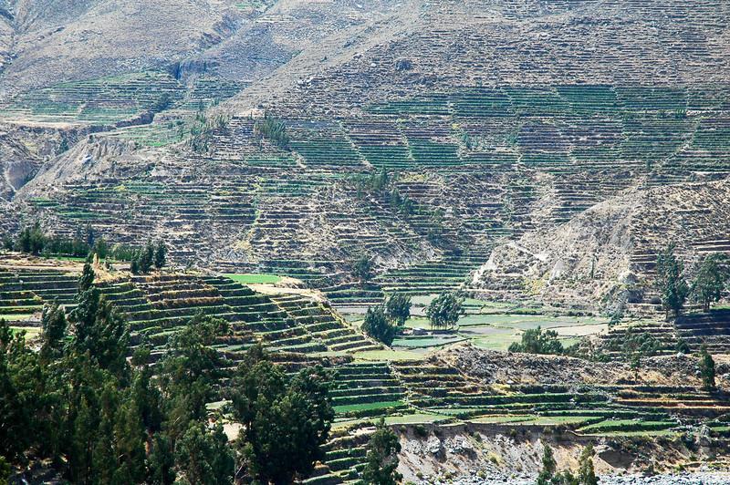 Peru Ecuador 2007-044.jpg