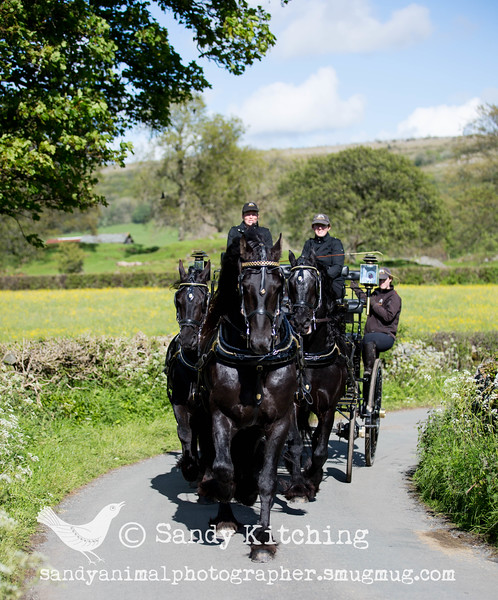 Friesian Experience Unicorn May 2015