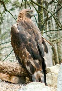 Zoo- Birds
