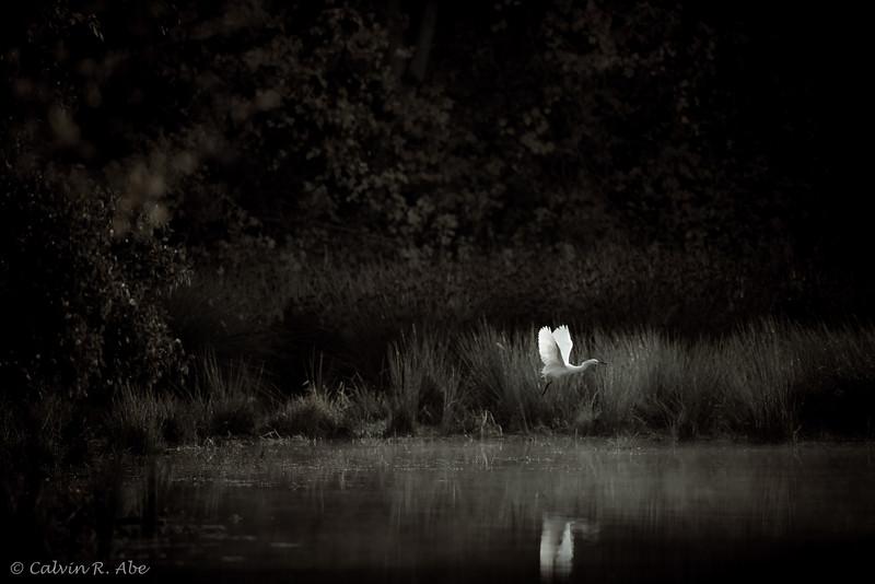 Egret Moment-6.jpg