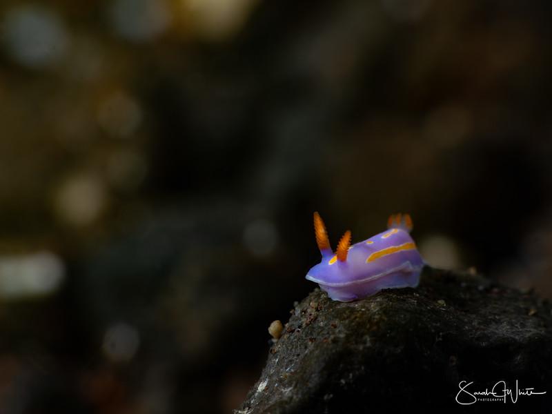 Bali-17012020-2535-Edit.jpg