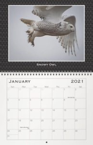 2021 My Favorite Owls Calendar Months